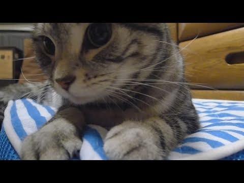 どっちが指を上に乗せるかムキになる猫