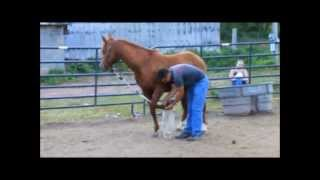 FOR SALE- Purebred Abidon son! Professionally Trained in Reining