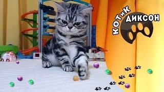 🐾😺 КОТиК ДИКСОН играет маленькими шариками Орбиз.Смешное видео про кошек