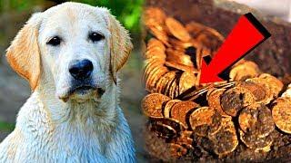 Парень подобрал на улице пса, и тот отплатил удивительной верностью и принес ему богатство...