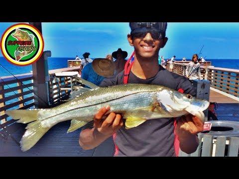 Juno beach snook fishing youtube for Juno pier fishing report