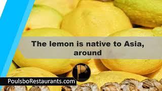 Download Native Restaurants Video Sosoclipcom
