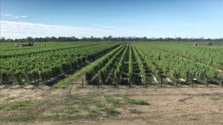 A Time-lapse production - From Farm to Market