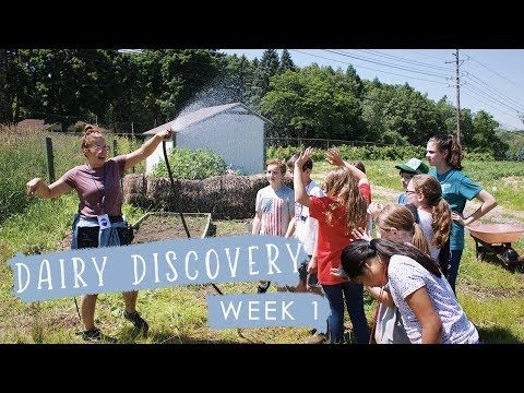 Dairy Discovery Camp at Bowers School Farm (Week One)