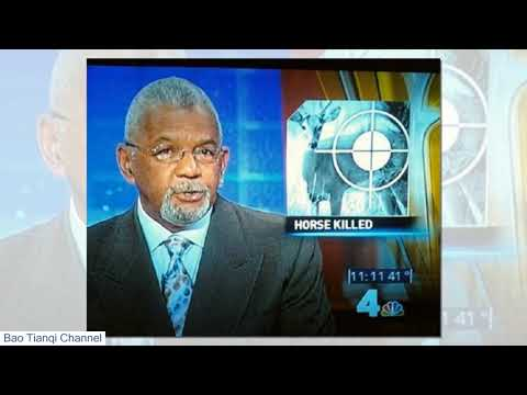 Funniest News Bloopers Of All Time Funny Fails Daily Pics