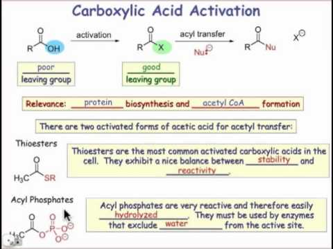 Carboxylic Acid Activation