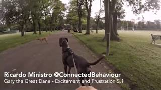 Gary the Great Dane - Excitement and Frustration S.1