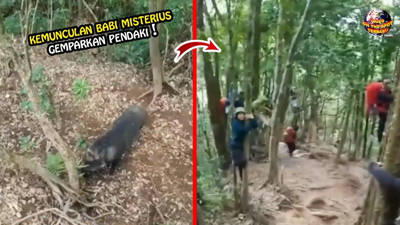 Diteror Babi Ganas!! Pendaki Gunung Sampai Naik ke Atas Pohon