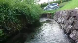 湧水町 丸池湧水公園