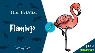 Draw Endangered: How to Draw a Flamingo