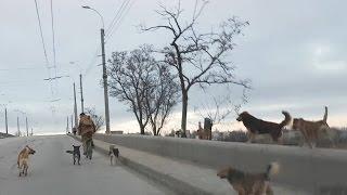 Собаки нападают на велосипедистов