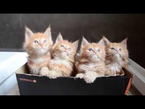Cute Kittens at Play || ViralHog
