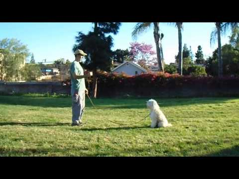 sirius-k9-academy-intermediate-obedience-test-exercise---stand-in-front