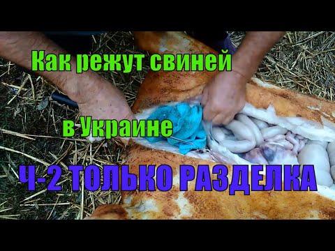 Как забить свинью,Как заколоть свинью,Как обсмалить свинью,Как разделать свинью Ч-2-РАЗДЕЛКА