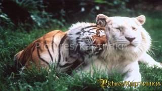 Самые милые животные.Рicture Show