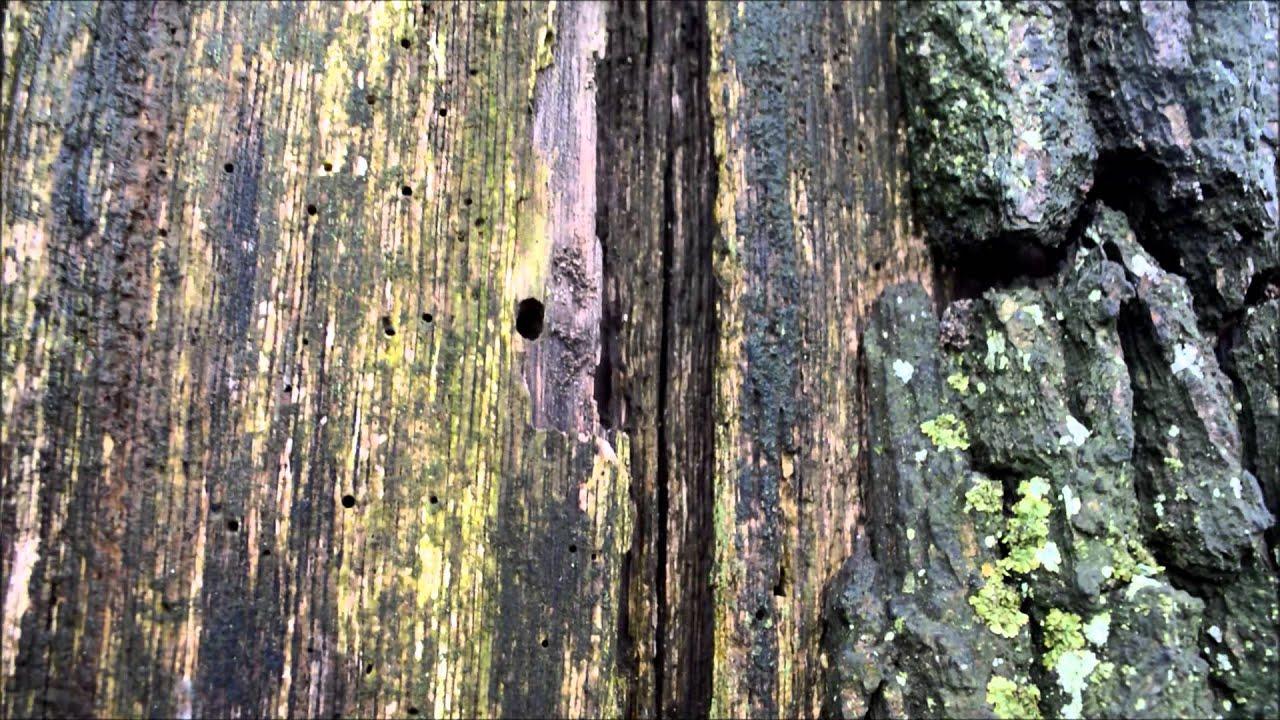 Baum Vom Blitz Getroffen