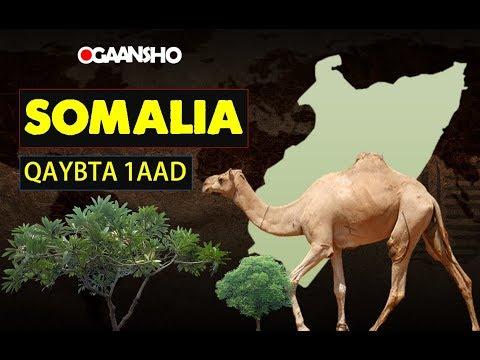 soomaaliya | Qaybta koobaad  | #OGAANSHO