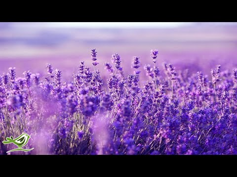Relaxing Harp Music: Stress Relief, Sleep, Meditation, Spa | Instrumental Background Music ★53