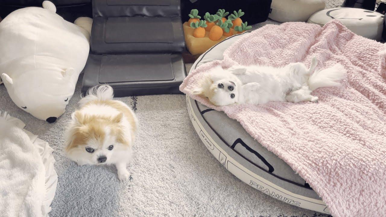 飼い主が帰宅しても塩対応の犬2
