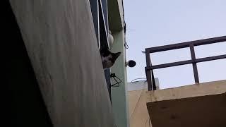 고양이 잡곡이 집으로 도망가는 영상