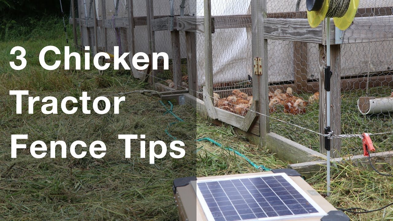 3 Chicken Tractor Electric Fence Tips