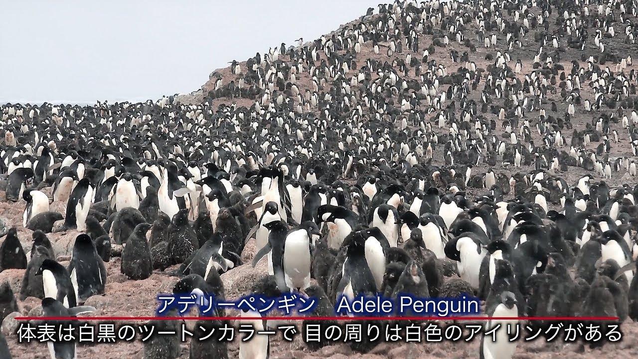 【動画】南極への旅(南極半島クルーズ)
