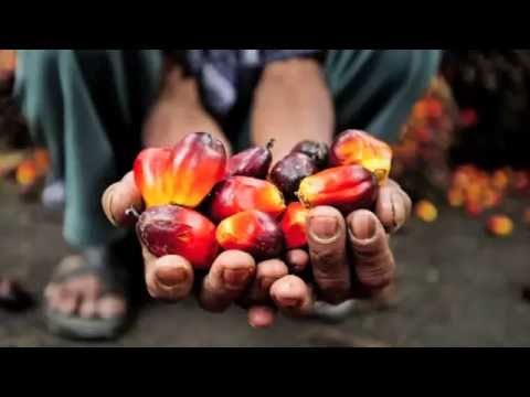 MADE's PALM OIL INTERVENTION IN THE NIGER DELTA