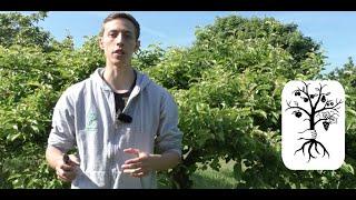 Repeat youtube video Wasserschosser (Wassertriebe) richtig entfernen - Baumschnitt | Grundlagen Obstbaumschnitt