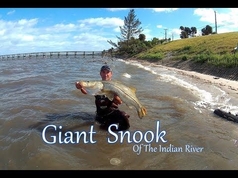 Catching A GIANT SNOOK  Wade Fishing The Indian River
