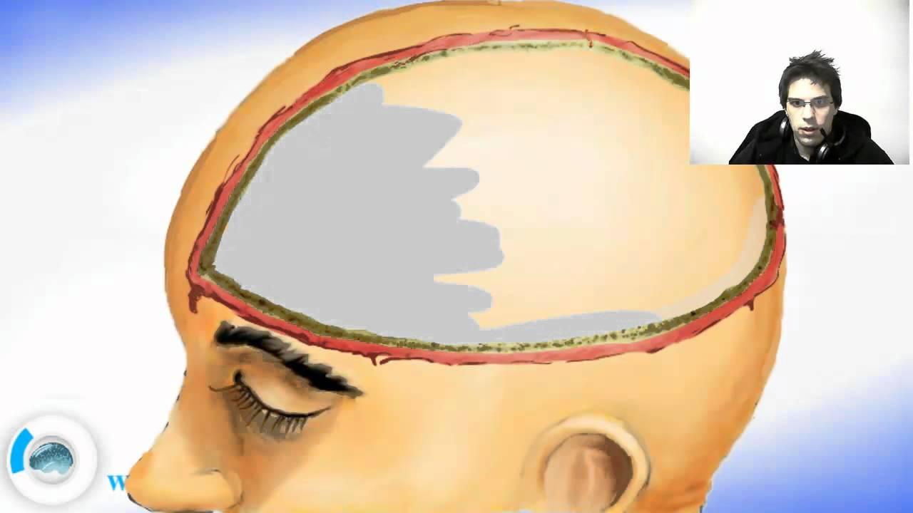 Brain Meninges - Dura Mater - YouTube