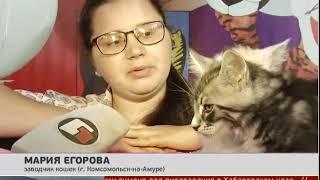 Дорогих породистых кошек представили на выставке в Хабаровске. Новости. 07/06/2018. GuberniaTV