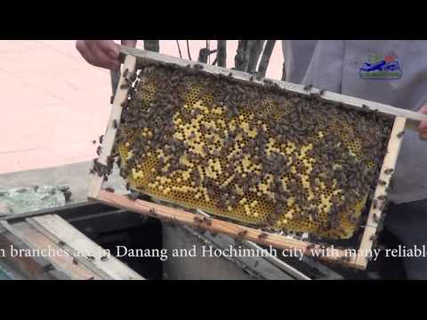 Video Thu Hoach Mat Ong - Honey Bee process of honey making in Vietnam