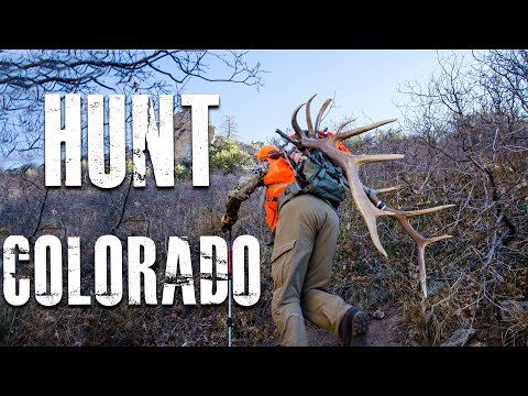 How To Hunt Colorado (For Elk, Deer And Antelope)