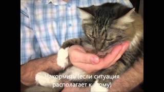 Как помочь животному на улице?!