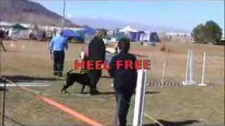 Dog Training | First Place Obedience
