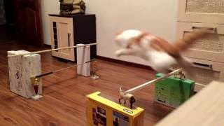 Кошки/Тренировка #конкур#животные конника#