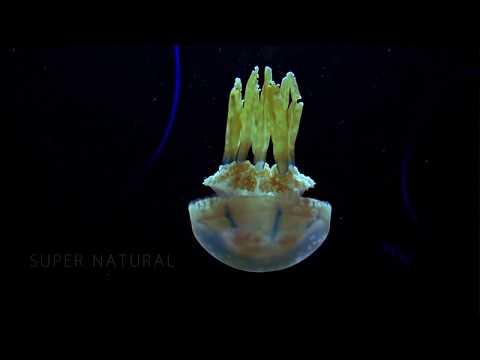 Zhao - Super Natural (Videoclip Oficial)