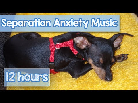 12 Hours of DEEP SEPARATION ANXIETY MUSIC For Dogs! Helped 10 Million Dogs! NEW!