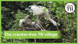 The bird friendly TN village