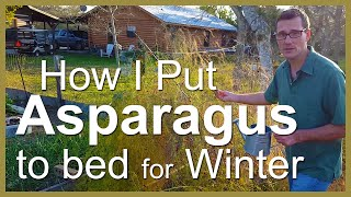 Asparagus: Put it to bed for Winter
