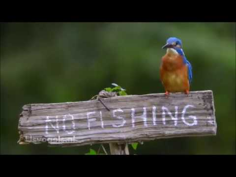 Kingfisher:  Breaking The Law
