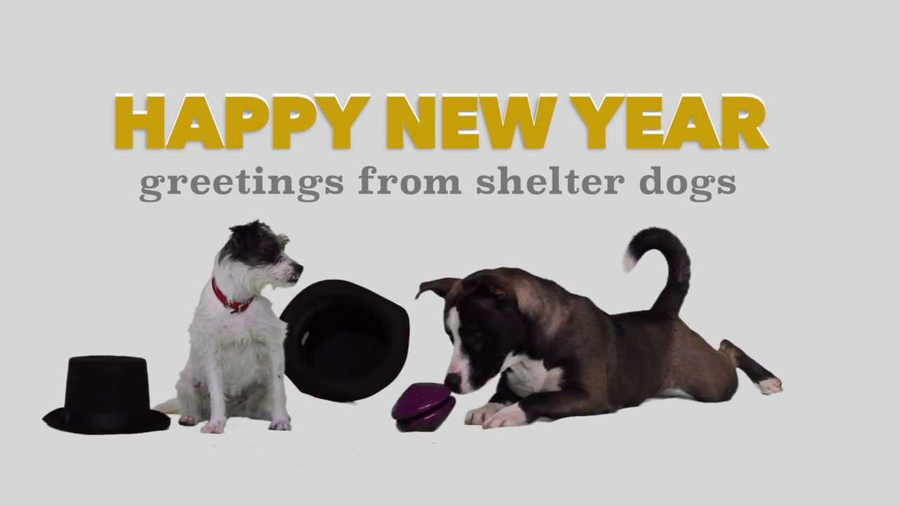 happy new year 2015 dog rescue stars
