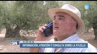 Teléfono de información y avisos de detección de la Xylella fastidiosa
