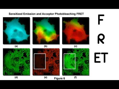 FRET - fluorescence resonance energy transfer (fret)
