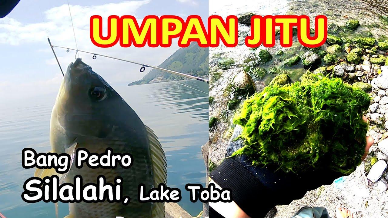 Umpan Ikan Nila Danau Toba Paling Jitu Youtube