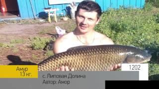 Фотоальбом - Рыбалка №240