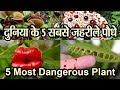 दुनिया के 5 सबसे ज़हरीले पौधे।। 5 Most Dangerous Plant