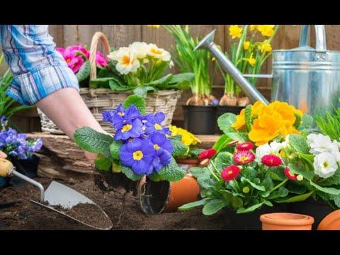 Вопрос: Как создать яркий миниатюрный цветник из неприхотливых растений?