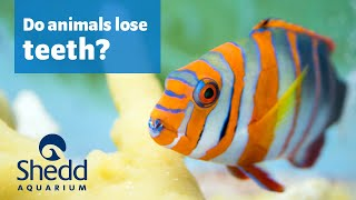 Sea Curious: Do Animals Lose Teeth Too?