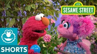 Sesame Street: Elmo Wants to Play Ball with Abby!